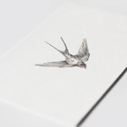 troostkaart zwaluw